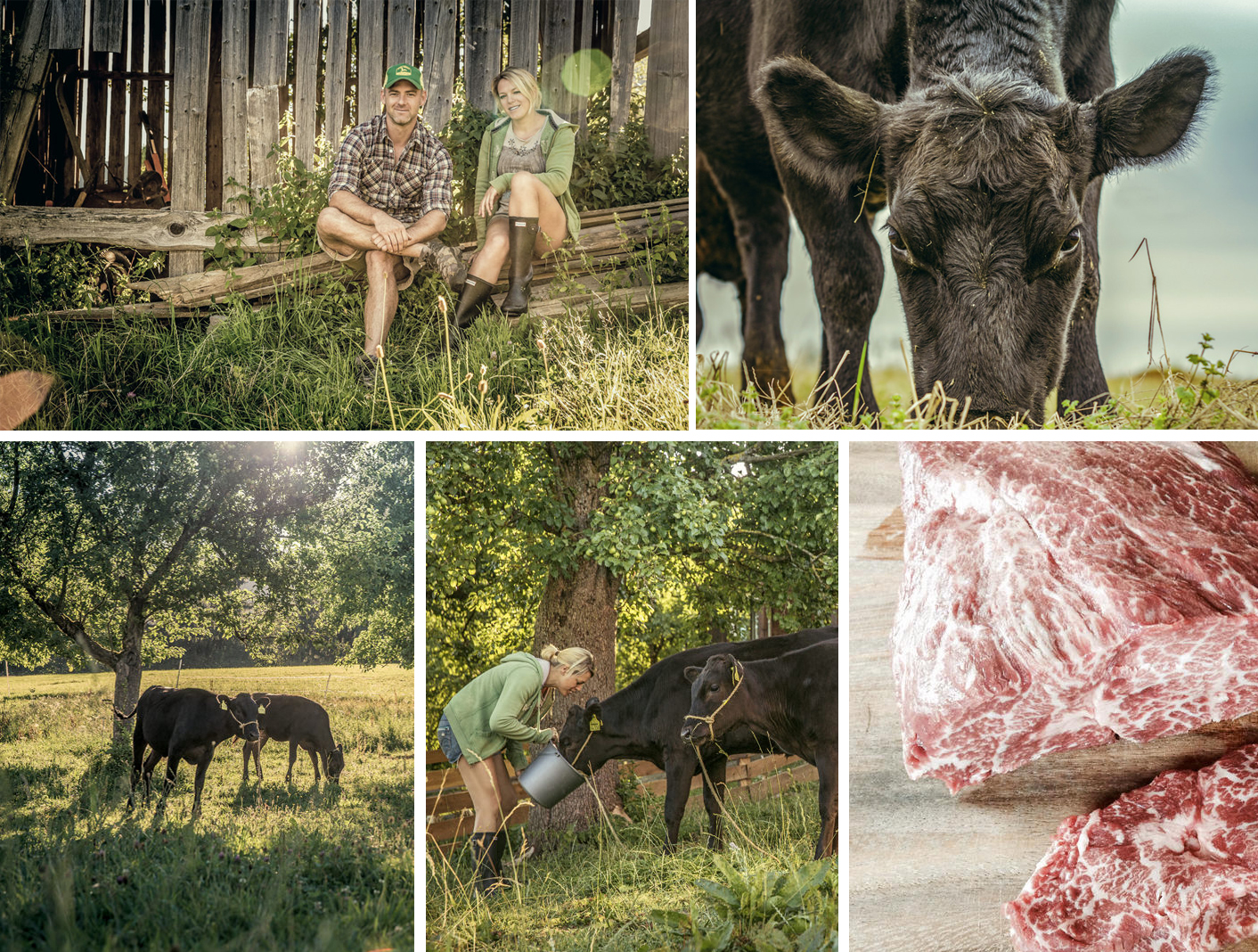 Photocollage Landwirtschaft