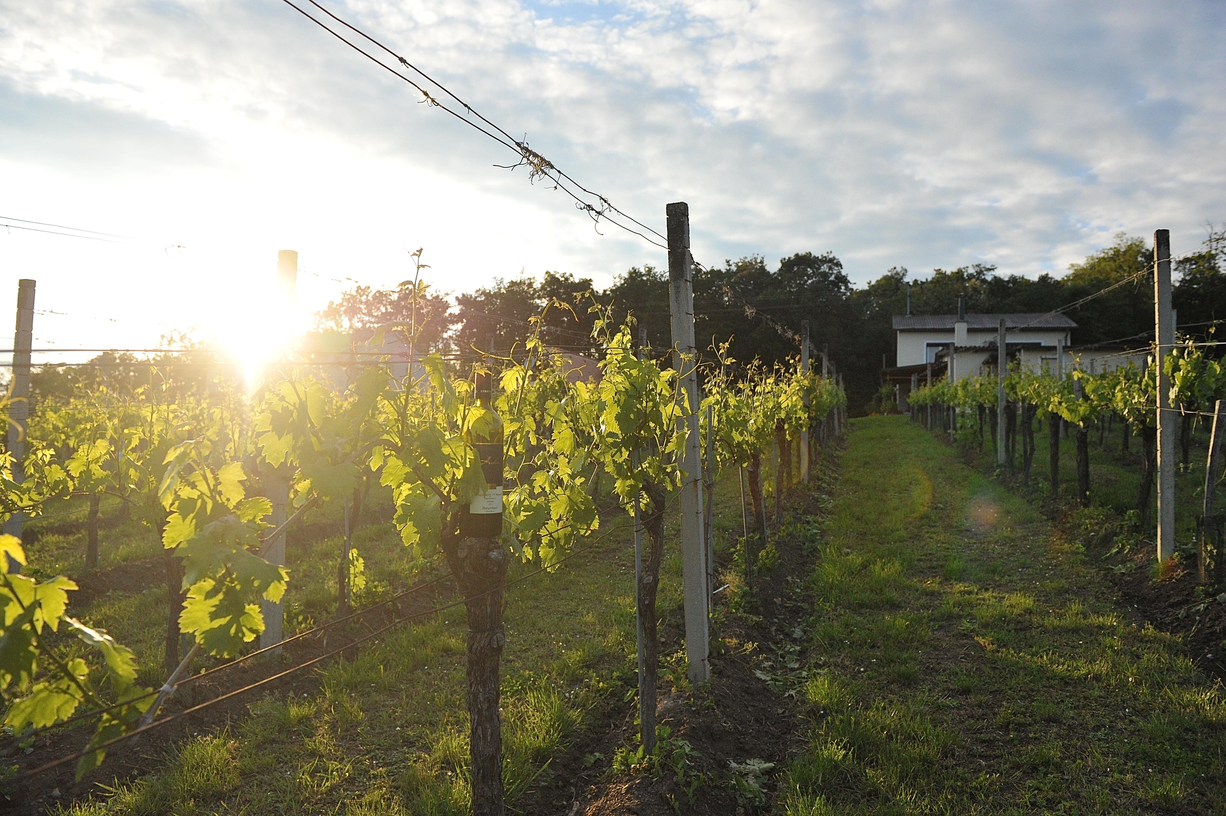 Weinbau Heiden, Eisenberg, Weinidylle Südburgenland