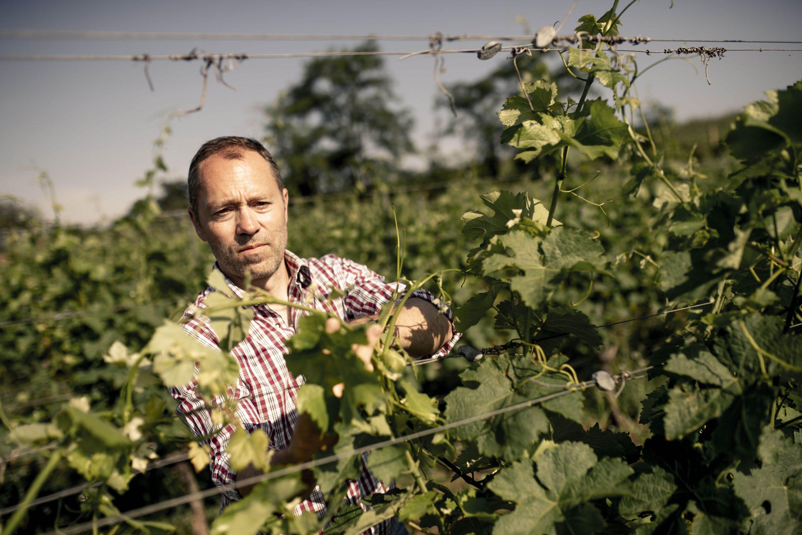 Davis Weszeli im Weingarten