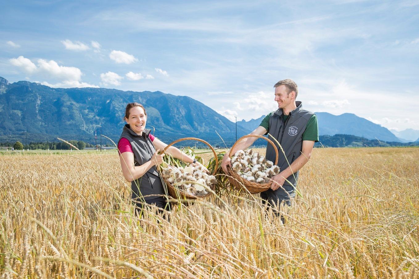 Mann und Frau im Getreidefeld mit Körben voll Knoblauch