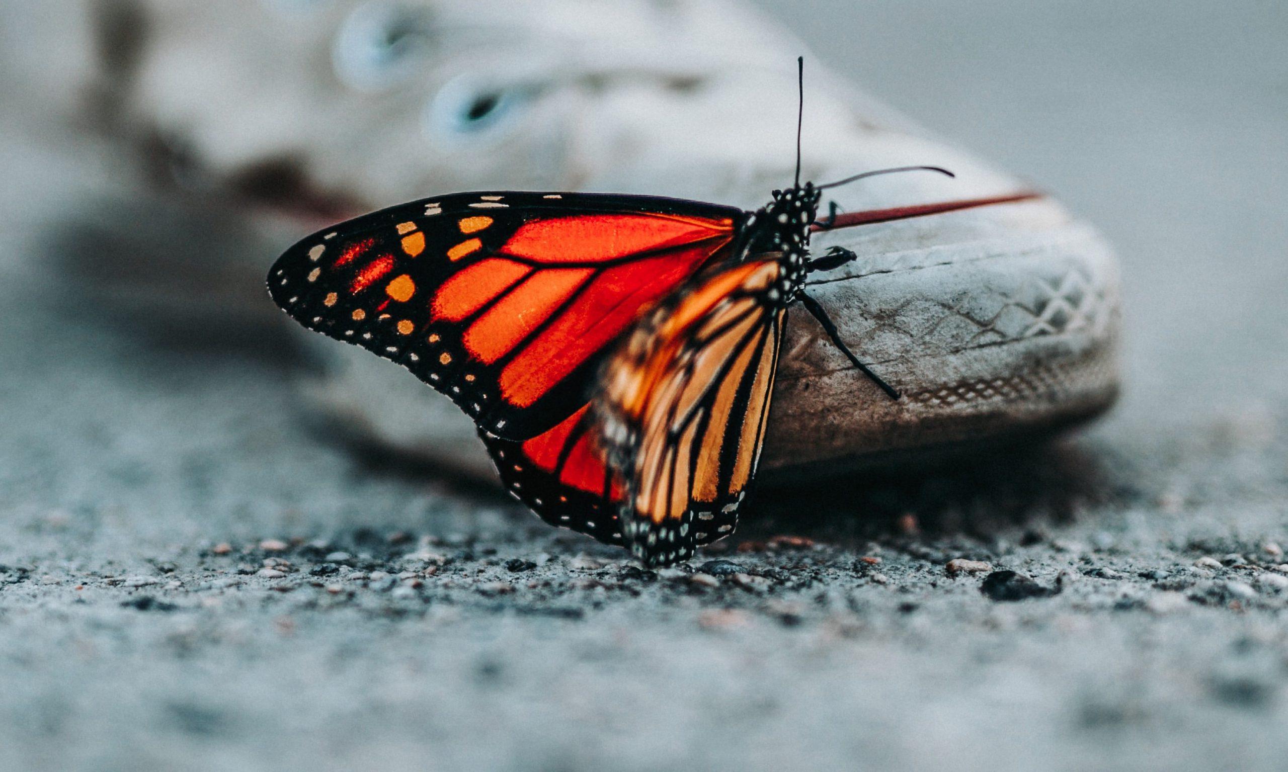 Roter Schmetterling auf grauem Beton