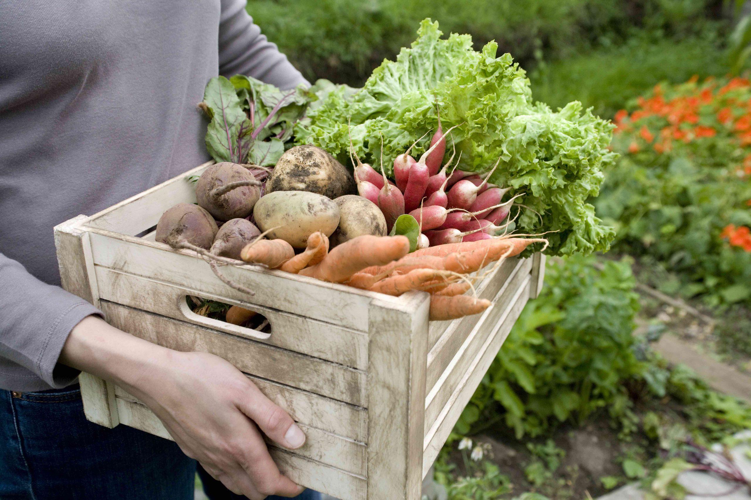 Frau trägt Kiste mit Gemüse