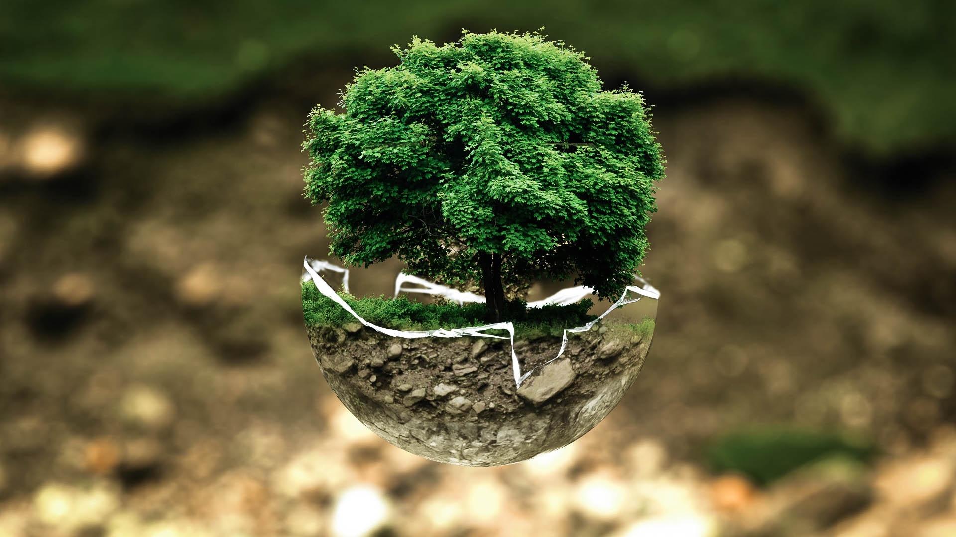 Baum wächst aus einer zerbrochenen Glasschale