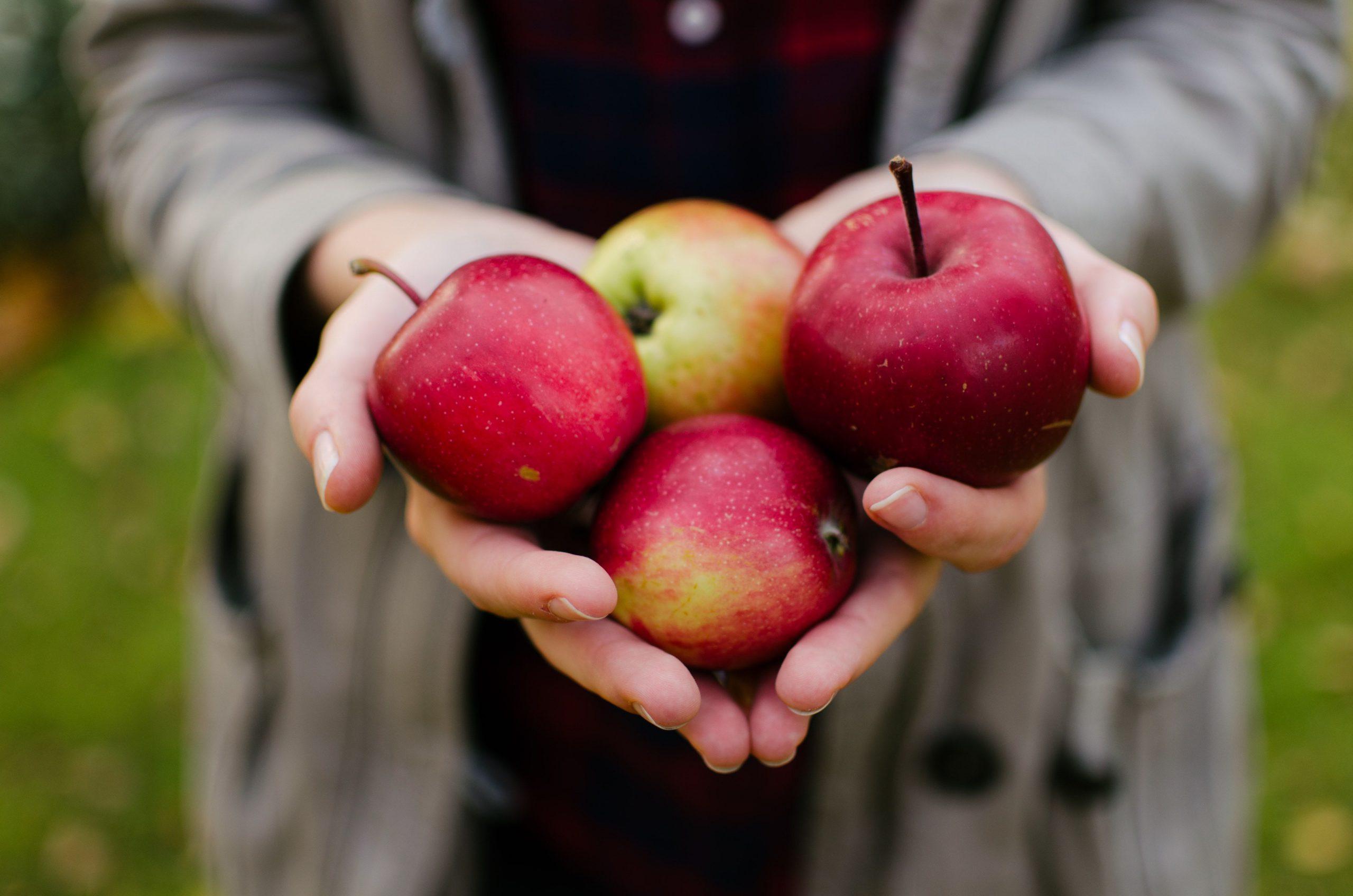 Frauenhände mit Äpfeln