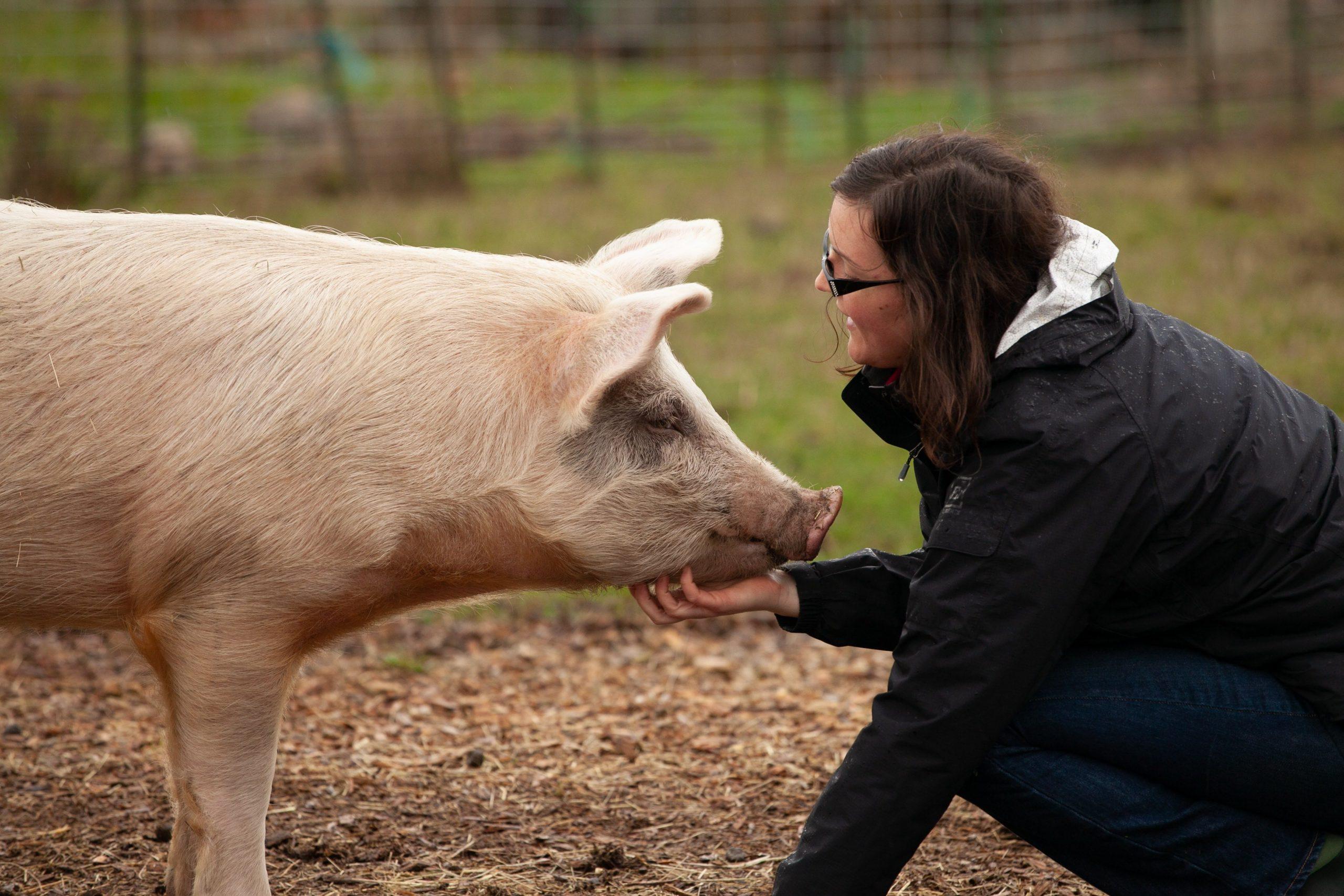 Frau streichelt ein Schwein