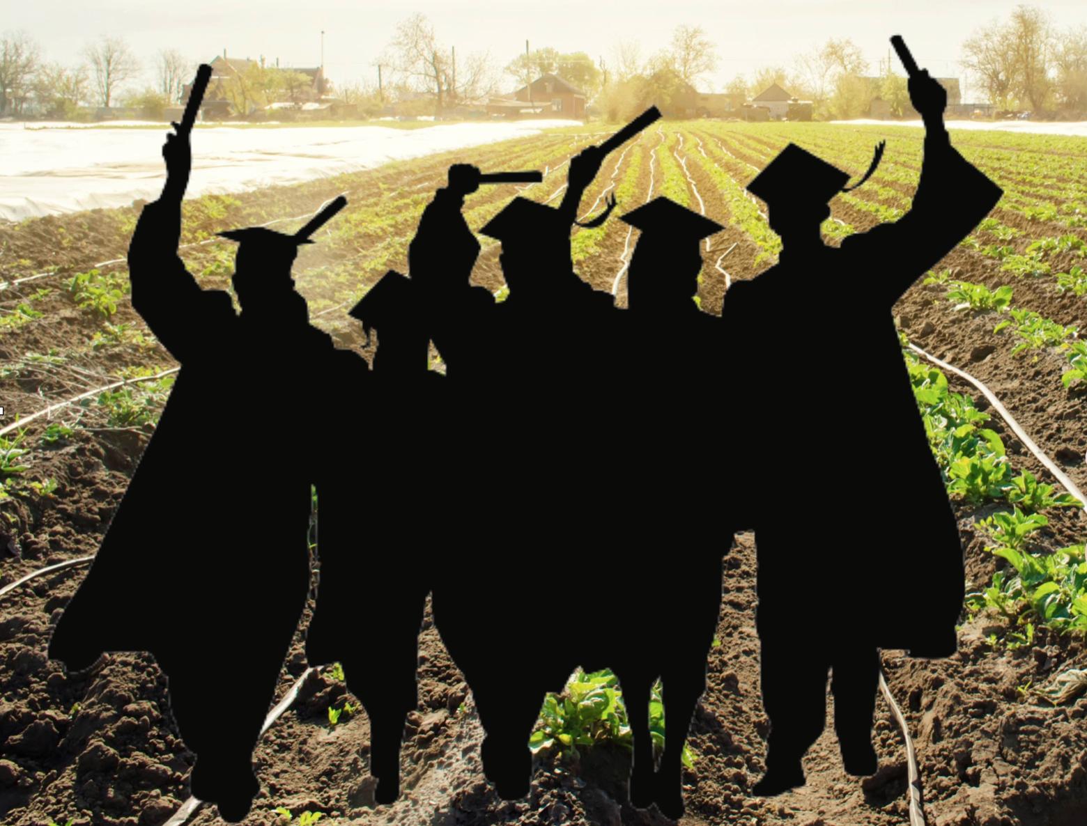 Fotocollage, Silhouette von Diplomanden auf einem Feld