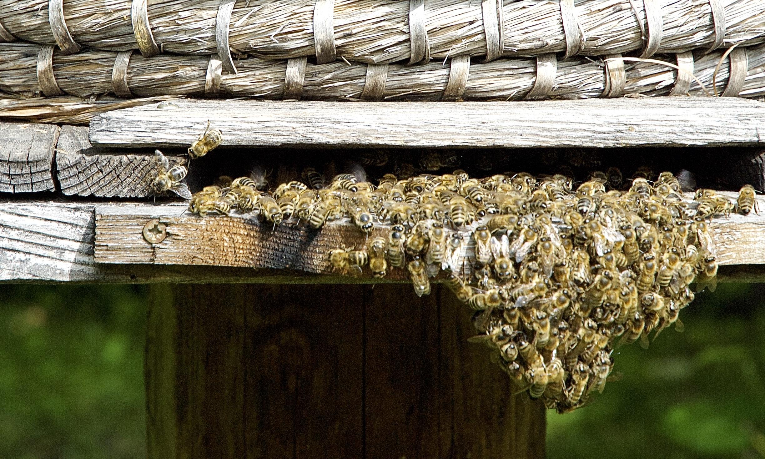 Ein kleiner Bienenstock