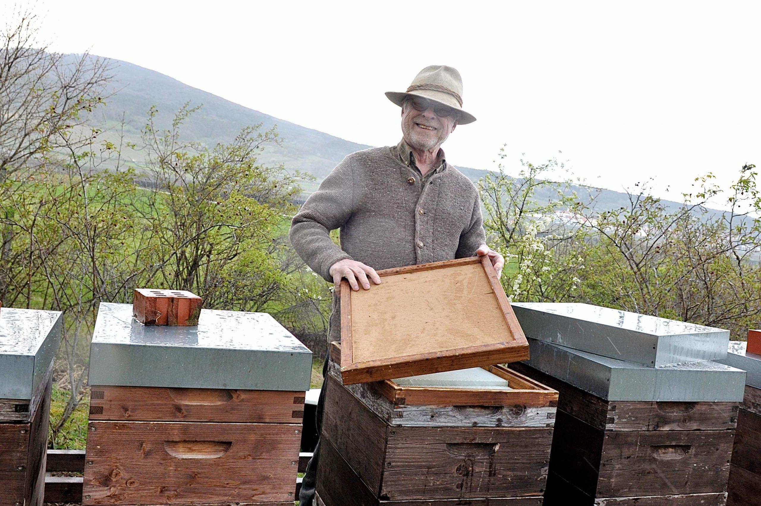 Imker bei den Bienenstöcken im Frühling